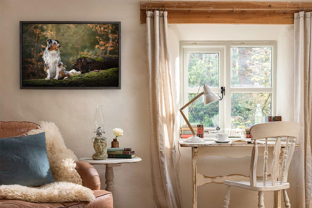 Framed canvas of shepherd dog on rural office wall
