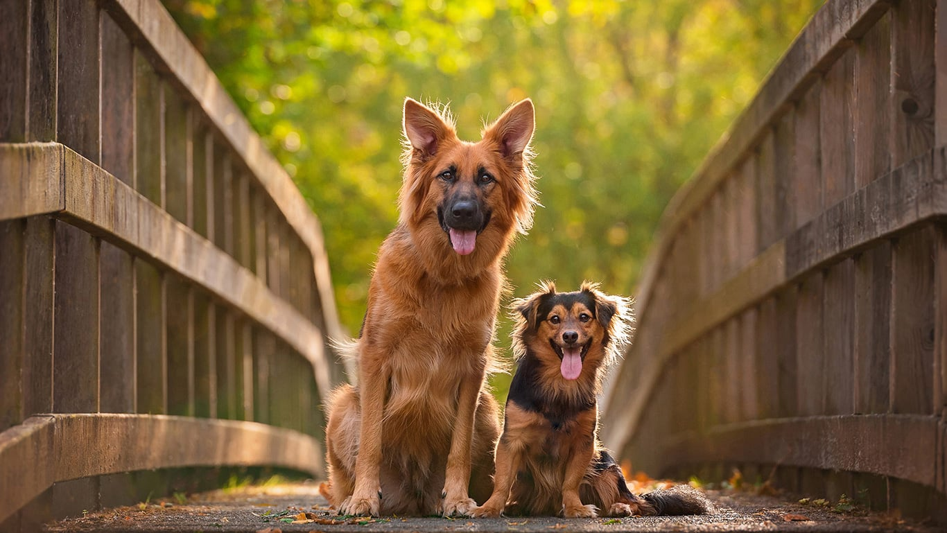 Two dogs sitting on bridge in Kettering
